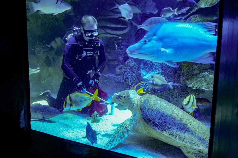 Giant Ocean Tank. Image courtesy of New England Aquarium