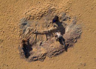 Prehistoric Whales